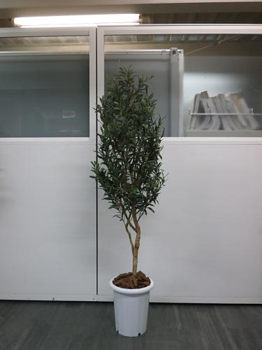 LION 人工植物 中古|オフィス家具|その他